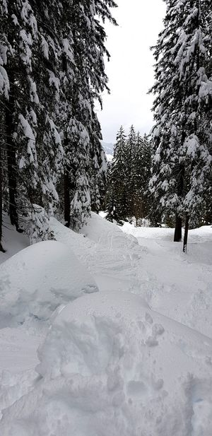 Tree Snow Cold Temperature Winter Sky Landscape Deep Snow Powder Snow Ski Track Skiing Ski Resort  Ski Lift Pine Tree Snowfall Snowing Snowboarding Ski-wear Ski Holiday Ski Slope Ski Pole Snowcapped Mountain