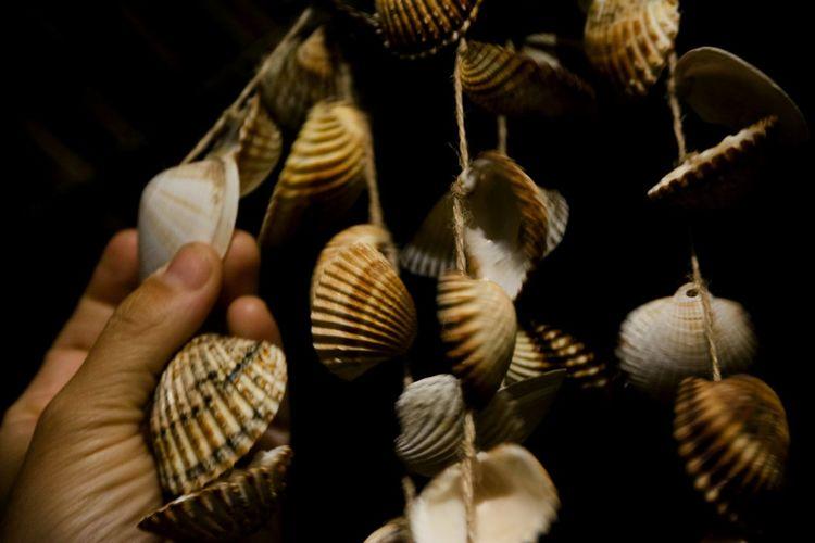 Cropped image of hand holding seashells