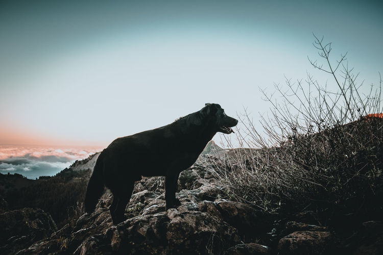 Dog looking away on rock against sky