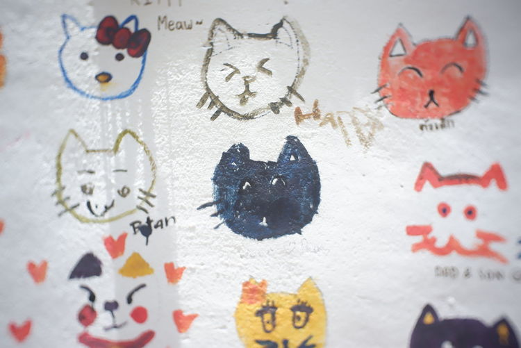 Cats Of EyeEm Wall Art Animal Background Background Defocus Background Designs Background Photography Background Texture Backgrounds Cat Cat Lovers Cats Wall - Building Feature Wall Textures Wallpaper Wallpaper Background Wallpaper Design Wallpapers
