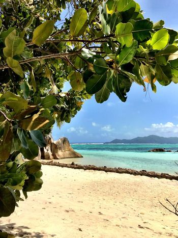 Best Beach In The World Sea Nature Beauty In Nature Beach Scenics Leaf Tranquil Scene Tranquility Tree Water Day Branch Outdoors Sky Sand Sunlight Blue Horizon Over Water Growth Fruit Shotoniphone7 Seychelles Amazing Place La Digue