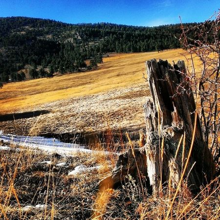 Spring Has Sprung Colorado landscape hike beauty life trees mountains field enjoy photography