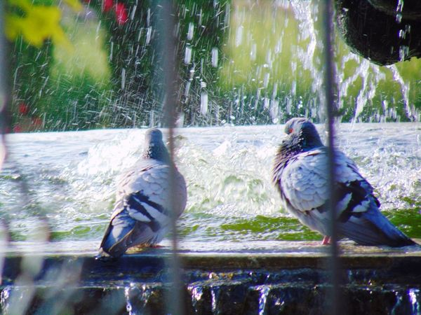 Konya Pigeons Pigeon Dove Guvercin Birdwatching Bird Photography Birds Of EyeEm  EyeEm Birds Birds Anatolian Water Falls Water Splash Photographers_tr Waterdrop Photography In Motion Eyem Best Shots 43 Golden Moments Break The Mold Art Is Everywhere TCPM EyeEmNewHere The Street Photographer - 2017 EyeEm Awards BYOPaper! Visual Feast The Architect - 2017 EyeEm Awards The Photojournalist - 2017 EyeEm Awards The Great Outdoors - 2017 EyeEm Awards The Portraitist - 2017 EyeEm Awards Sommergefühle EyeEm Selects Wine Not EyeEm LOST IN London Neon Life Be. Ready. Adventures In The City This Is Latin America Going Remote Visual Creativity The Traveler - 2018 EyeEm Awards