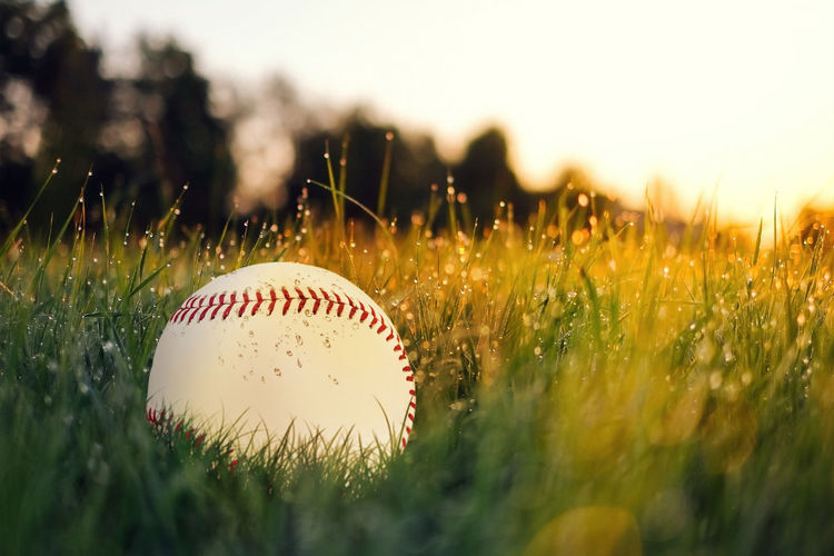 Ball Baseball - Ball Baseball - Sport Close-up Day Grass Nature No People Outdoors Playing Field Selective Focus Sport
