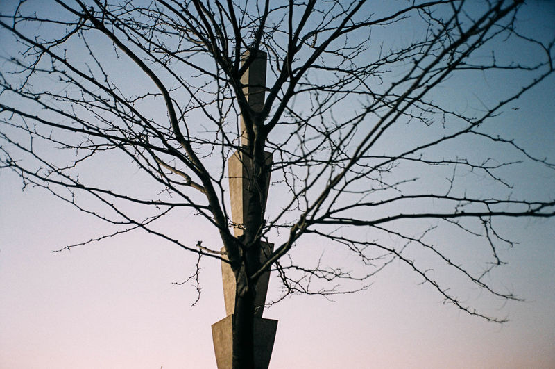 Financial District  Manhattan New York New York City Statue Bare Tree Beauty In Nature Branch Clear Sky Day Dead Plant Dead Tree Dried Plant Le District Lone Low Angle View Nature No People Outdoor Outdoors Park Scultpure Sky Tree Tree Trunk