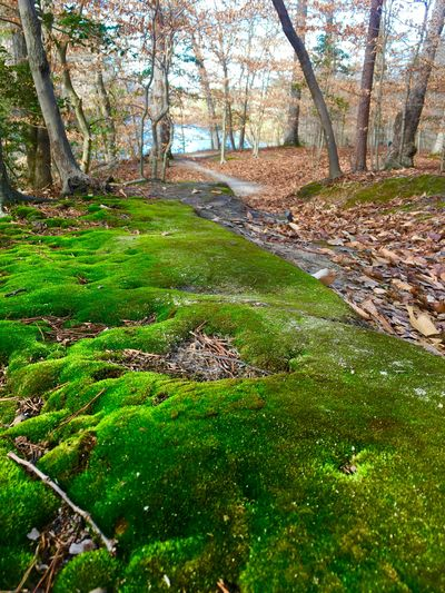 Moss Trails Tree Nature Tranquil Scene Scenics Beauty In Nature Tranquility Tree Trunk Green Color Landscape Forest Moss Outdoors No People Grass Day Growth Rural Scene