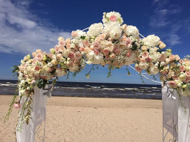 Beach Flower Sky Nature Blue Summer Clear Sky Nice Jurmala Pion Beauty In Nature Beautiful