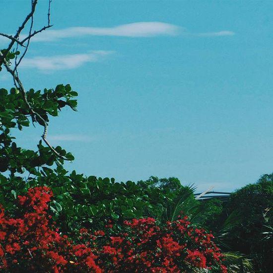 ™. → A Beleza está no vermelho, o azul é só um complemento→ [ by DanielBones ] → [ Mk_natureza Mk_flores Mk_ceu Insta_pensadores VSCO Vscocam Vscobrasil Vscogood Vsco_br Folkbrasil Igerses Igersbrasil Insta_pensadores Espiritosantowalk Fotoencantada Cameraemfoco Freedomthinkers Brskies Fotografos_brasileiros Achadosdasemana Professionalbrazil Great_captures_brasil Instadozamigos Clubsocial ]