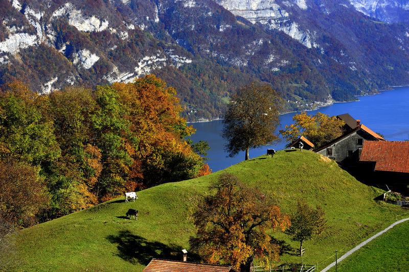 Aussicht Berge Herbst Herbststimmung Panorama Schweiz Beauty In Nature Color Day Forest Färben Kurfirste Kurfirsten Landscape Nature Outdoors Scenics Swiss Switzerland Tree Walensee Walensee Switzerland Lake Wasser