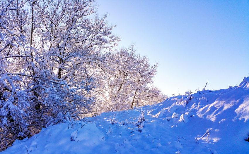 snow covered trees Blue Sky Snow Trees Wales Winter Cold Cold Temperature Nature Reserve Today снег зима Nature Sky Outdoors Beauty In Nature
