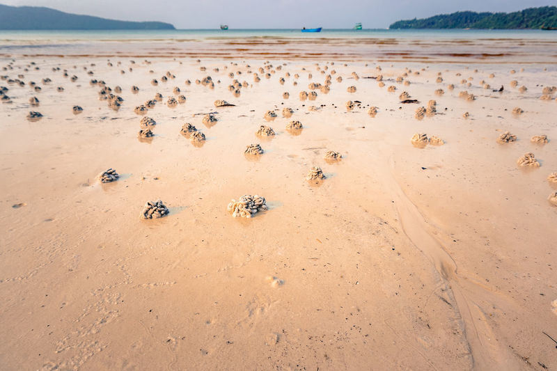 EyeEm Nature Lover Nature Beach Beauty In Nature Crabs No People Summer Sunset Tropical