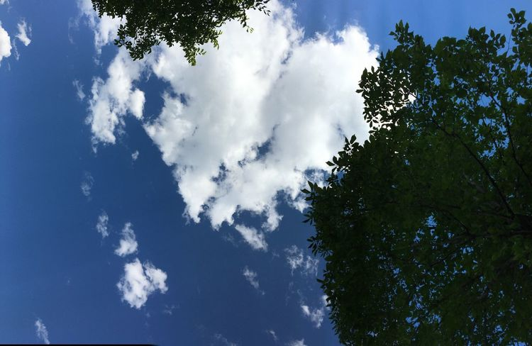 💙 I Heart You Love Heart Cloud Formations Heart Shape Sky Cloud - Sky Low Angle View Tree Plant Nature Day Beauty In Nature No People Growth Scenics - Nature Blue Outdoors Branch Tranquility Sunlight Tranquil Scene Directly Below