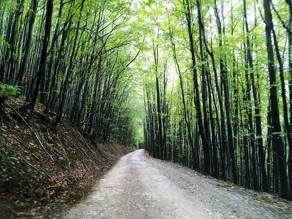 Forest Tree The Way Forward Nature Tranquility Beauty In Nature Abundance Tranquil Scene Growth Scenics Green Color Outdoors Road Day No People Landscape Lush - Description Bamboo Grove