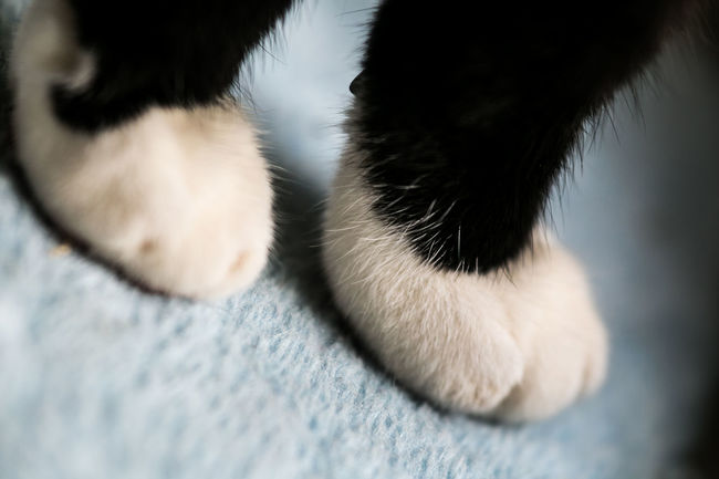 Beatyful Nature Cat Feets Cat Lovers Cat Pranks Close Up Animal Portrait Close Up Nature Kitty Cat Softness Sweet