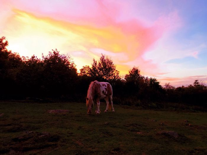 My Year My View Grayson Highlands National Park Animal Themes
