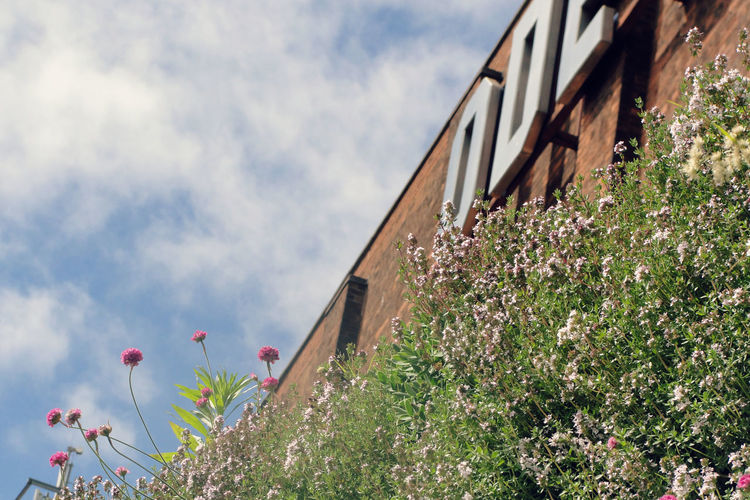 Low angle view of plants against the sky