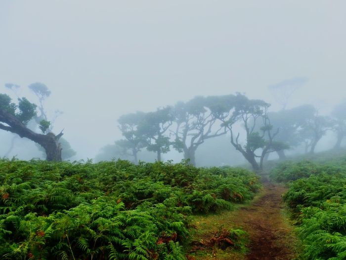 Mystic Foggy Landscape in Madeira, Portugal. Fog Tree Nature Mountain No People Landscape Outdoors Beauty In Nature Forest Scenics Tree Area Foggy Mystic Landschaft Nebel Nebelmeer EyeEmNewHere First Eyeem Photo Madeira Madeira Island Portugal Märchenwald Nature Natur Lost In The Landscape
