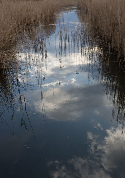 Reflections of clouds and sky in a drainage ditch with reeds growing on the margins. Blakeney Norfolk Uk Norfolk Beauty In Nature Cloud - Sky Day Ditch Dyke  Grass Growth Nature No People Outdoors Plant Reed - Grass Family Reflection Scenics - Nature Sky Standing Water Tranquil Scene Tranquility Water