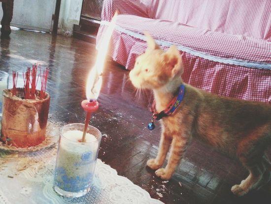 อย่าเล่นกับไฟ Cat Pet Fire Flame