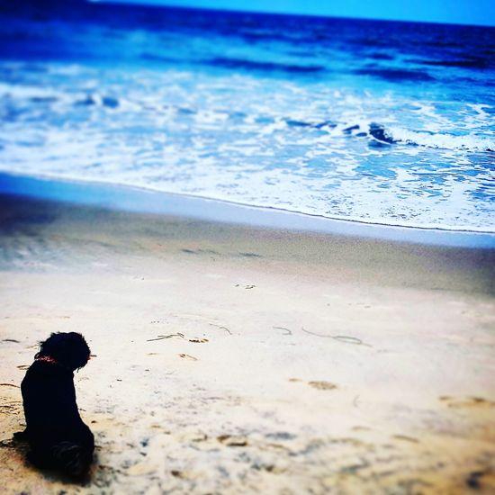 Beach Sand Sea Water Shore Tranquil Scene Solitude Coastline Dog Affenpinscher Waves, Ocean, Nature Animals Pets