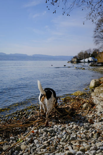 Dog on rock at beach against sky