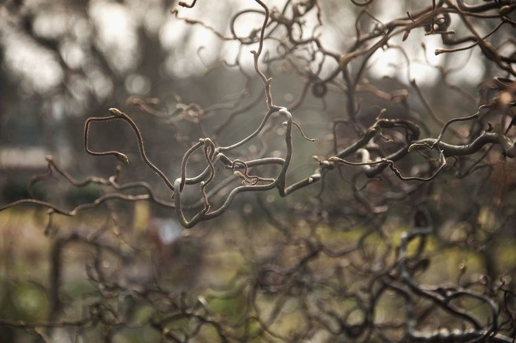 Branches Nature Photography Extraordinary Nature Inmygarden Mysterious