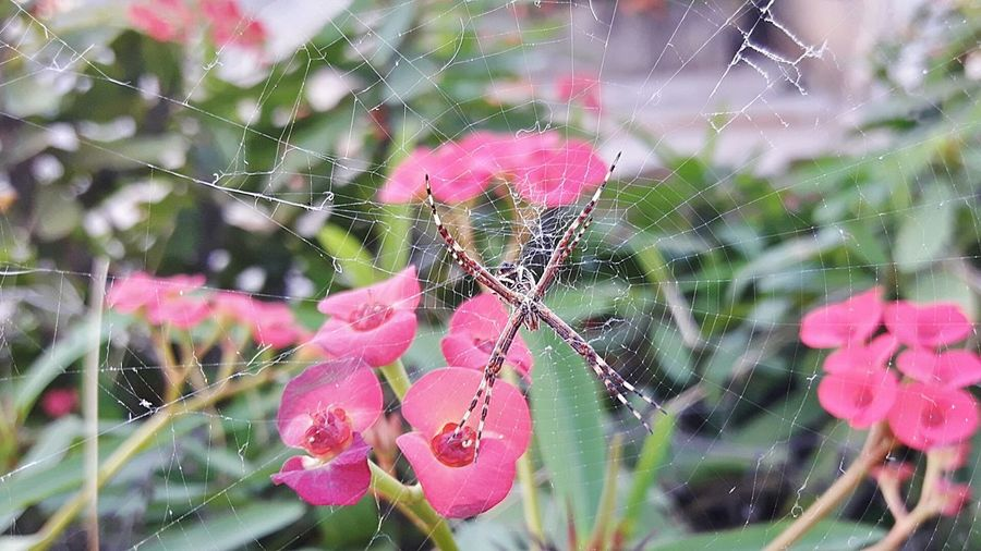 Exclusive  Jardim Aranha Spider TeiaDeAranha Engenharia Arachnid Aracnideo Arachnophobia Ecologic AndreLima Natureza Exclusivo Perfect Insetosdobrasil Folhas Aranhas Aranha Eyemanimals UaU