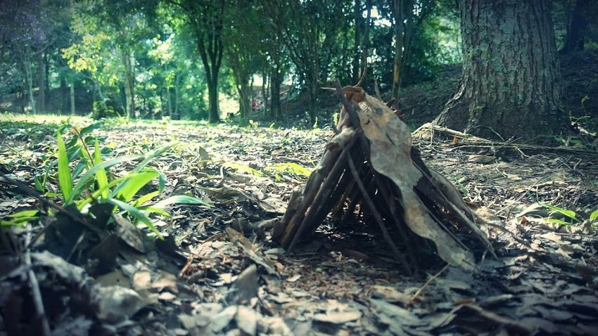 Small Hut Hut Branches Sticks Nature Miniature Leaves Forest