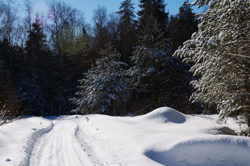 Forest Road Road Forest Track Track Wintertime March Tree Snow Winter Cold Temperature Sky Countryside Snow Covered White Snowcapped