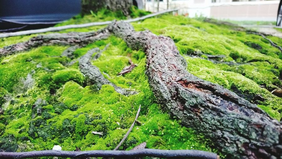 Beauty In Nature Grass Moss Plant Focus On Foreground Close-up No People Day Outdoors Nature Green Color Growth