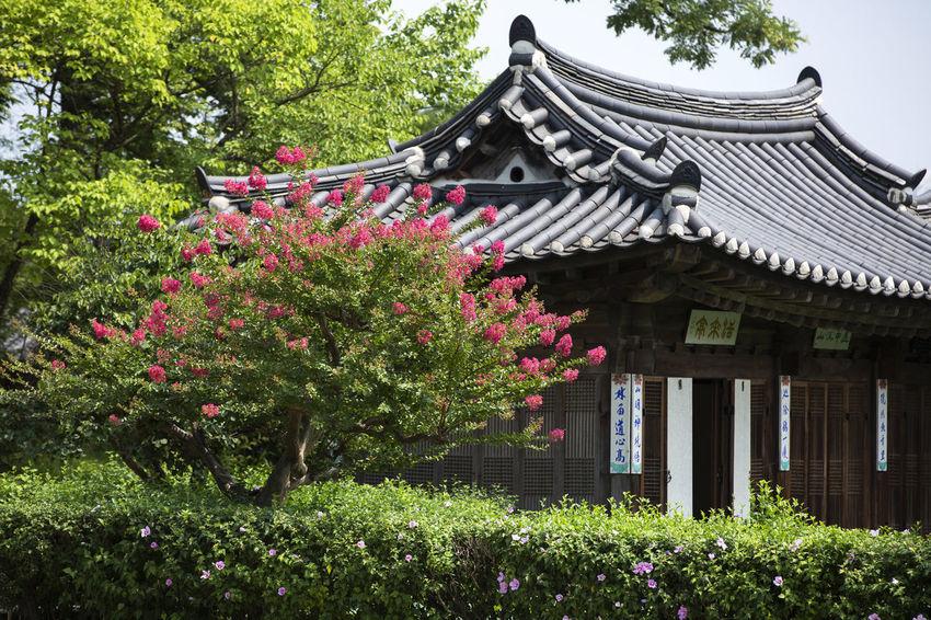 활래정 Korea Gangwondo,Korea KangReung Tree Flower Roof Eaves Tradition Traditional Building Cultures Architecture Building Exterior Sky