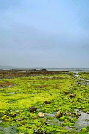 Sea Water Horizon Over Water Beauty In Nature Rock - Object Green Color Ocean Coastline Shore Cornwall Walks Cloud - Sky Great Britain St Michael's Mount