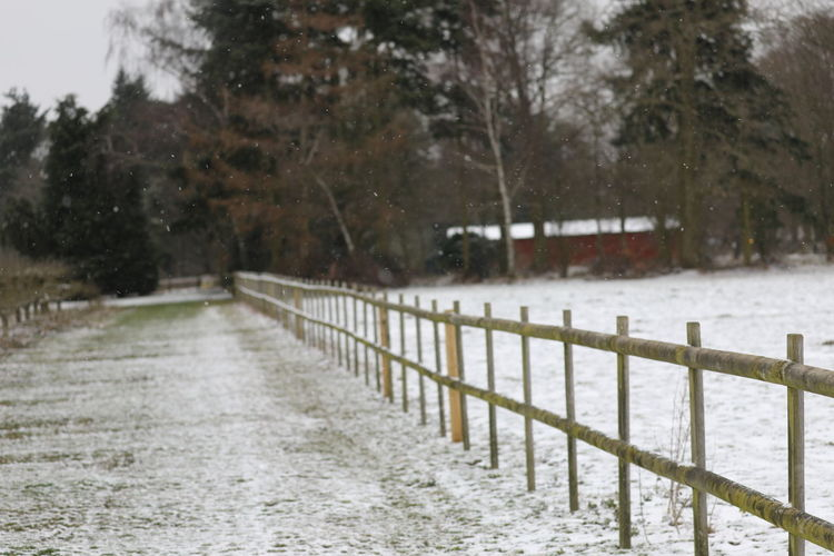 Tree Snow Cold Temperature Plant Nature Winter Day Barrier Fence Boundary No People Snowing Land Landscape Outdoors Water Footpath Wood - Material Scenics - Nature