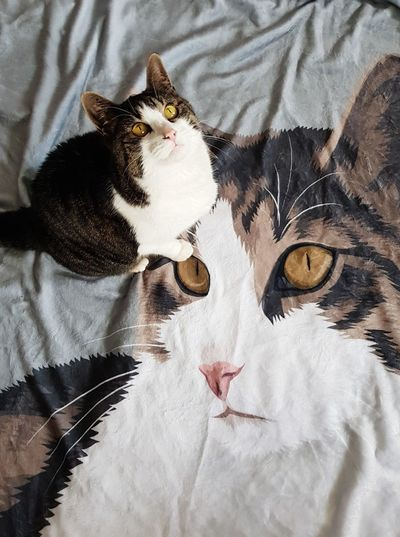 High angle view of cat on bed at home