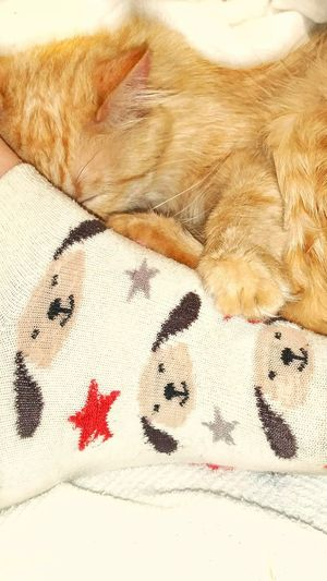 TK Maxx Socksie Feet Foot Cat Asleep Human Body Part Its Me Close-up Texture Pattern Socks Clothing Multi Colored Dogs Animal Animal Themes Dog Socks Funny Socks Cute Socks Lazy Cat Mammal Indoors  Warm Clothing Softness Soft Texture Cozy