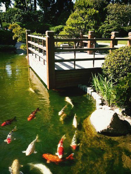 Japanese Garden Long Beach, California USA  CSULB