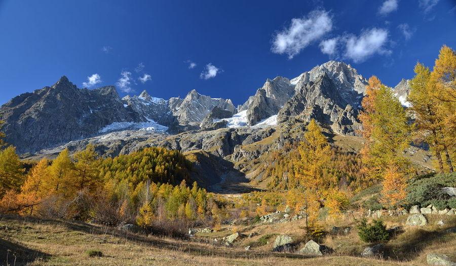 Trees against rocky mountain range