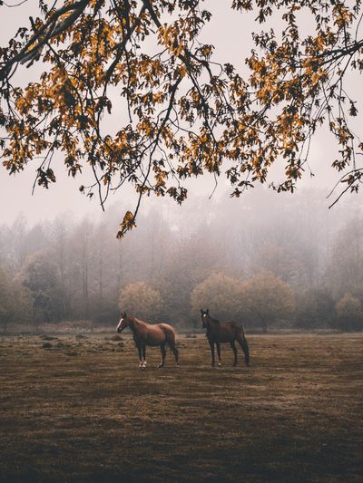 Tree Nature Fog Animal Themes Domestic Animals Mammal Beauty In Nature No People Outdoors Day Branch Landscape Moose