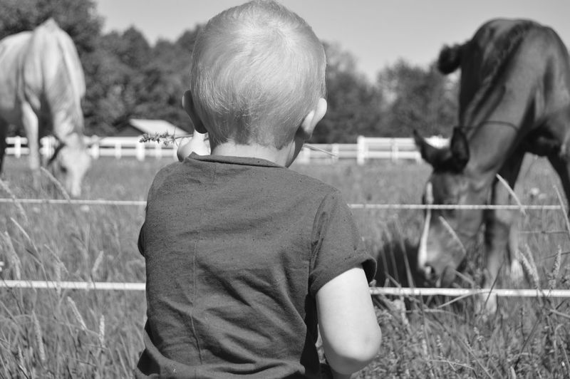 Rear View Of Boy Looking At Horses On Field