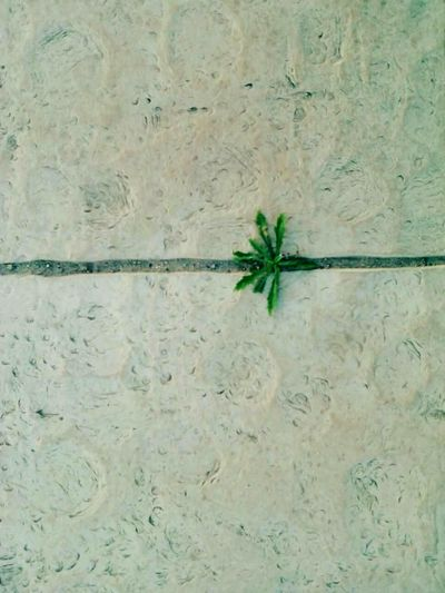 Wallpaper WallpaperForMobile Mywallpaper Mobilephotography Plants 🌱 Reaching Out Green Green Green!  Floortraits Floor Patterns Small Things Smallthingsthatmakemehappy Small Plants Plants Hasard Simplicity Simple Photography Getting Inspired Instadaily Sudden Simple Things In Life Simplelife
