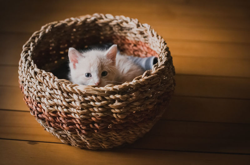 Portrait of kitten in basket