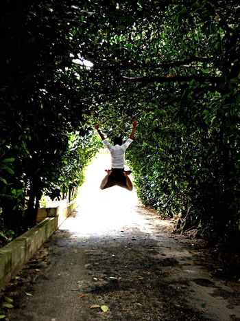 Fukugi tree tunnel Jamp! That's Me