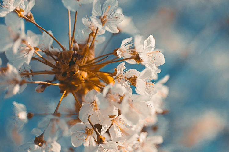 Almost Spring... EyeEm Best Shots EyeEmNewHere Orange Teal Beauty In Nature Blooming Blossom Branch Close-up Day Flower Flower Head Fragility Freshness Growth Moody Moodygrams Nature No People Outdoors Petal Sky Springtime Stamen Tree