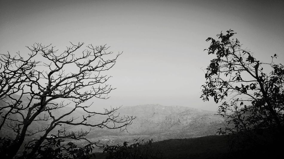 power of nature. Natural Beauty Mountain EyeEm Nature Lover Nature_collection EyeEm Best Shots Landscape_photography Trees Tree_collection  Trees And Sky Dead Tree Green Trees EyeEm Best Shots - Nature EyeEm Black&white! Outdoors Full Frame Complexity Uniqueness Tree First Eyeem Photo Fresh On Eyeem  EyeEmNewHere The Great Outdoors - 2018 EyeEm Awards Tree Area