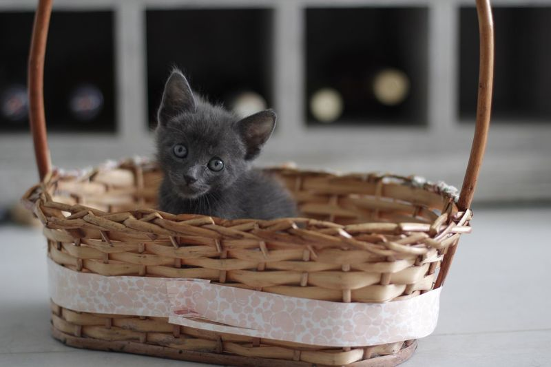 Close-Up Of Kitten In Basket