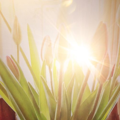 Close-up of sunlight falling on plant