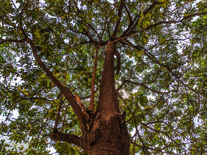 Tree Branch Forest Backgrounds Full Frame Tree Trunk Sky Tree Canopy  Growing Dense Leaf Vein In Bloom Plant Life