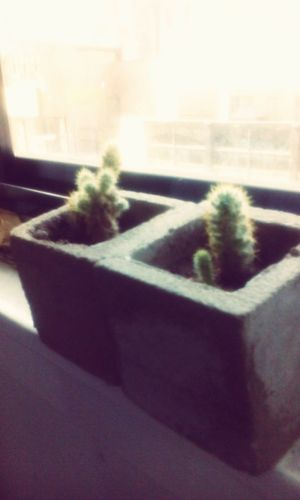 GrowingUp Cactus Life Taking Care Naturelovers Bethroom Love ♥