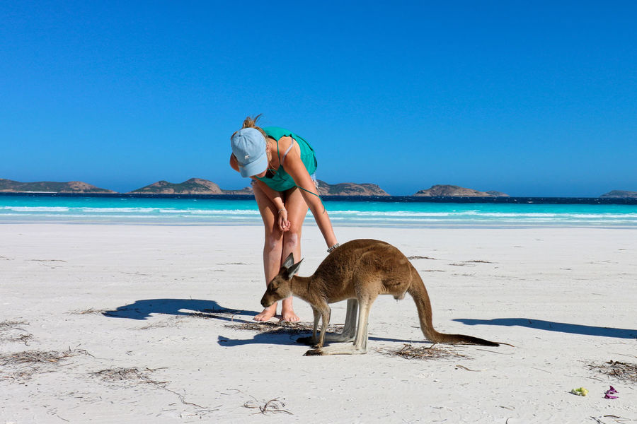 Animal Themes Beach Beauty In Nature Blue Clear Sky Horizon Over Water Kangeroo Mammal Nature One Animal Outdoors Real People Sand Sea Sky Sunlight Travel Destinations Water Be. Ready.