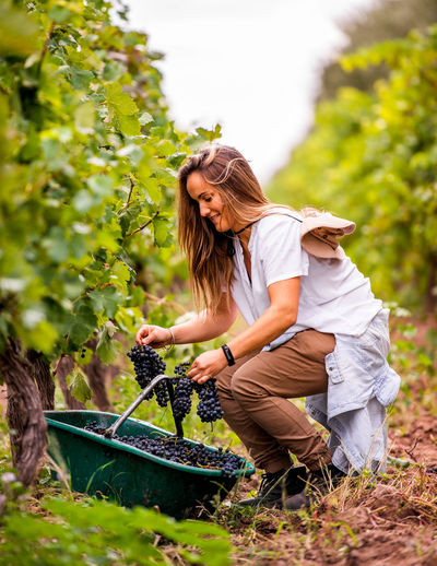 Woman keeping blueberries in basket at farm